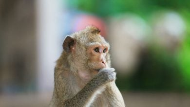 Photo of Stem Cell Implants Improve Monkeys' Grip After Spinal Cord Injury