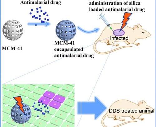 پیشرفت سیستم دارورسان ضد مالاریای با استفاده از نانوذرات مزومتخلخل سیلیکا – اخبار زیست فناوری