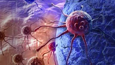 مارکر سلولهای بنیادی سرطانی-زیست فن