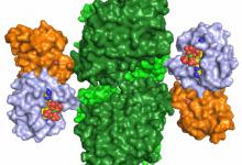 کشف غیرمنتظره یک آنزیم ضروری - اخبار زیست فناوری