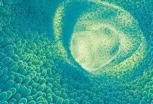 Photo of تأثیر پیوند میکروبیوتای مدفوع در نتایج شناختی و بالینی