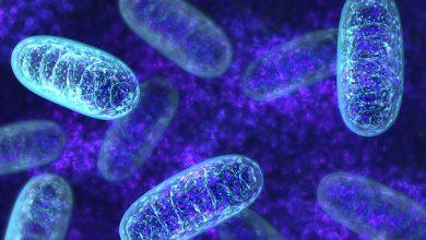 Photo of میتوکندریهایی با قابلیت تولید چربی