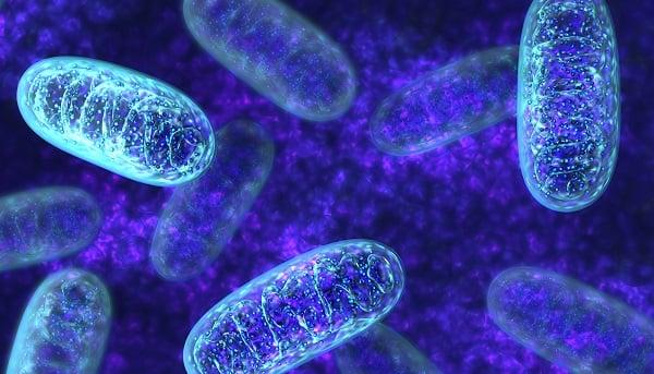 میتوکندریهایی با قابلیت تولید چربی-زیست فن