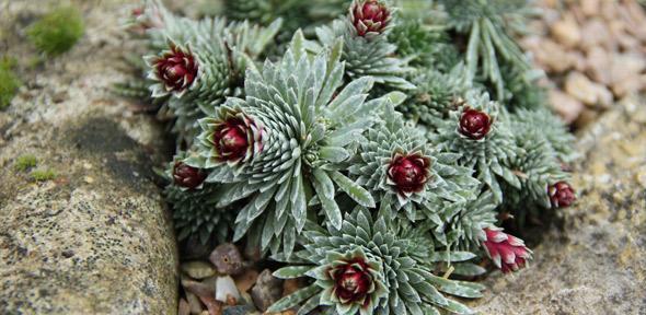 شناسایی ترکیبی ارزشمند و کمیاب در برگ گیاهان - اخبار زیست فناوری