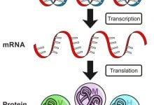 افزایش عملکرد گیاهان با پپتیدهای طبیعی - اخبار زیست فناوری