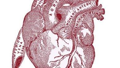 Photo of قلب، سیگنالهایی به بافتهای چربی ارسال میکند