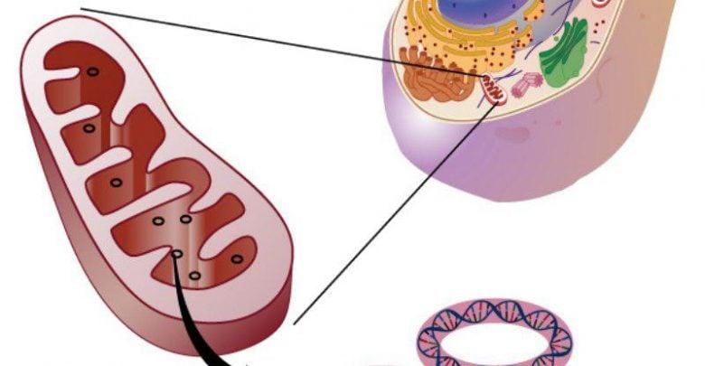 ژنوم مردان نمیتواند نفرین مادران را بشکند! - اخبار زیست فناوری