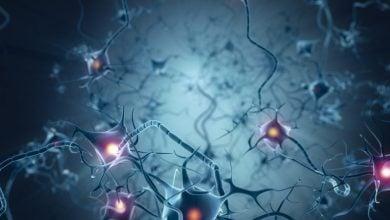 Photo of کشف ژنی با نقش ترمیمی برای سلولهای عصبی