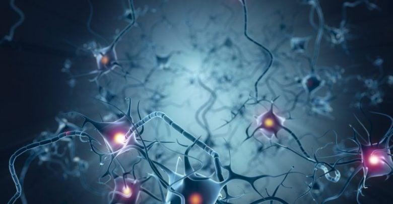 کشف ژنی با نقش ترمیمی برای سلولهای عصبی-زیست فن