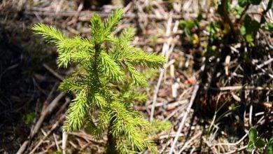 Photo of احیای جنگل به استخراج کربن از خاکهای سطحی کمک میکند