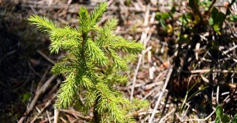 نقش احياي جنگل در استخراج كربن از خاکهاي سطحی - زیست فن