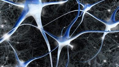 Photo of رشد سلولهای جدید مغزی در افراد مسن همانند افراد جوان