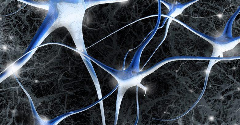 رشد سلولهای جدید مغزی در افراد مسن همانند افراد جوان-زیست فن