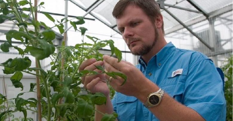 گروهی از محققان دانشگاه فلوریدا امیدوارند بتوانند با استفاده از فرایند های زیستی، به تولیدکنندگان در کنترل بیماری های کشنده محصولات نظیر بیماری Fusarium wilt کمک کنند.