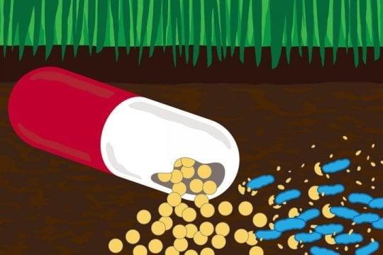 باکتریها و رفع آلودگیهای آنتیبیوتیکی