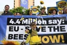 Photo of طرح حفاظت از زنبورها در اروپا