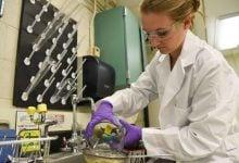 گروه WSU Tri-Cities در مورد بازیابی محیط زیست با قارچ ریشه ها و هم چنین در جهت بازگرداندن جمعیت گیاهان بومی تحقیق میکنند.