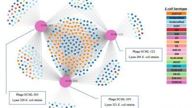 حذف باکتریهای بیماریزا با کوکتل ویروسی در یک مدل روده کوچک