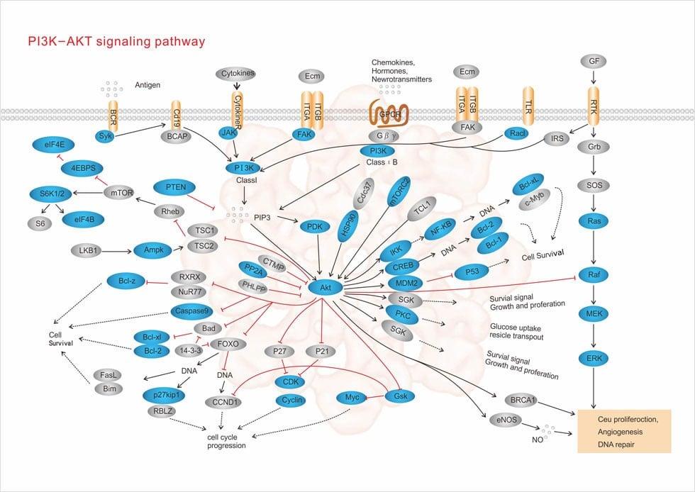 ویژگیها و فنوتیپهای بالینی/ایمونولوژیک بیماران