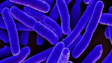 Photo of میکروبیوم روده و سرطان کولون