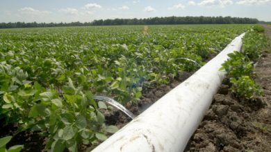 Photo of Determining effective methods of irrigation as water becomes increasingly scarce
