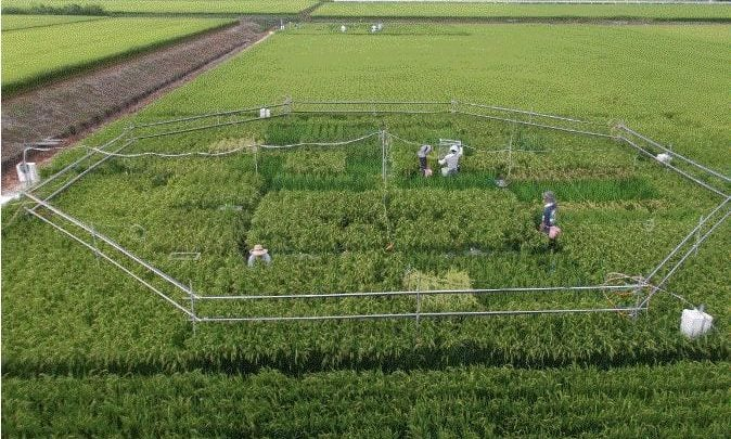 Increasing CO2 Levels Reduce Rice's Nutritional Value - اخبار زیست فن