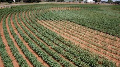 Photo of Less water, same Texas cotton
