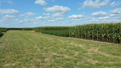Photo of Long-term study shows crop rotation decreases greenhouse gas emissions