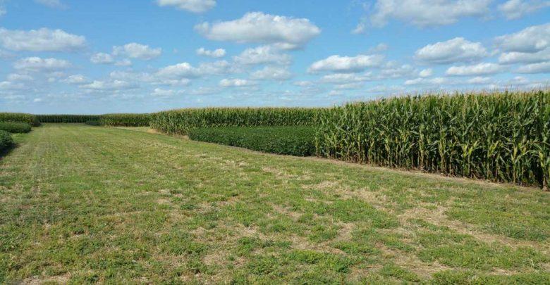 Long-term study shows crop rotation decreases greenhouse gas emissions - اخبار زیست فن