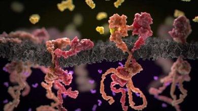 Photo of Tumors Shrink, or Grow, Depending on Drug Receptor–Receptor Effect