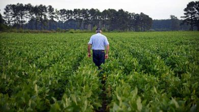 Photo of Pesticide resistance needs attention, large-scale study