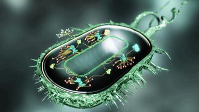 Photo of ساخت سلولهای فوقمقاوم با زیستشناسی مصنوعی
