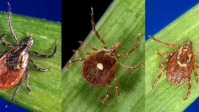 Photo of Tick bite protection: New CDC study adds to the promise of permethrin-treated clothing