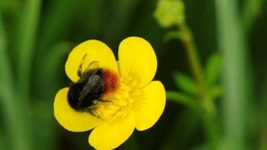 Photo of Virtual safe space to help bumblebees