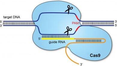 Photo of تسریع فرایند ویرایش ژنوم با دستکاری CRISPR