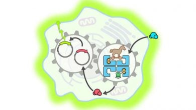 Photo of فعالسازی مسیرهای ژنی با آنزیم مصنوعی