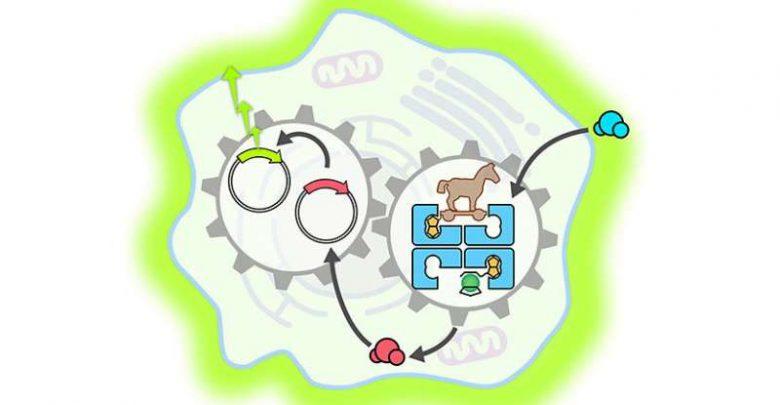 فعالسازی مسیرهای ژنی با آنزیم مصنوعی