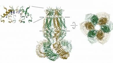 Photo of درک ساختار دریچه سلولیبرای کمک بهدرمان