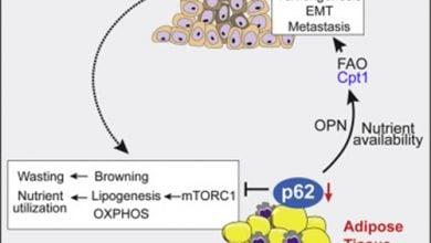Photo of دلیل انتقال انرژی از بافت چربی به تومور