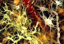 Photo of اثرمیکروبهای روده بر روی بهبود MS