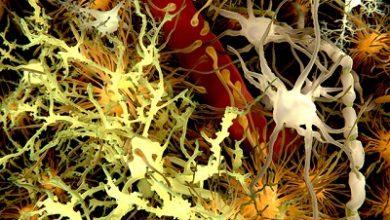 تاًثیر میکروبها بر فعالیت سلولهای مغزی موشهای مبتلا به MS