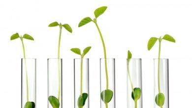 Photo of تولید بوتیلن گلایکول توسط شرکت  Genomatica و Bio-Botanica
