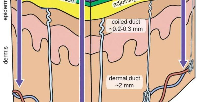 اندازهگیری عرق در دستگاه زیستحسگر پوششی