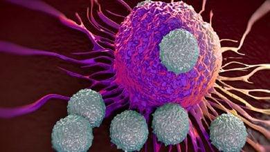Photo of نقش سلولهایTفرسوده در ایمنیدرمانی