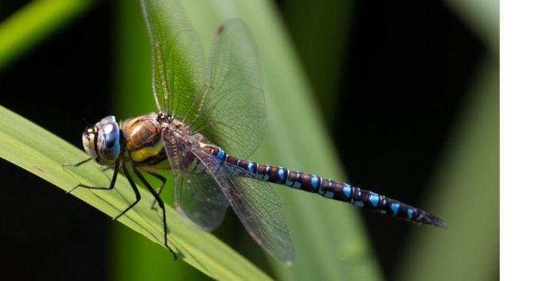 تحقیقات جدید یک زیستشناس نشان میدهد که شناخت فعالیتهای فیزیولوژیکی کوچک در این حشرات میتواند درک عمیقتری از نحوه ارتباط آنها با سایر موجودات در یک اکوسیستم آشکار کند.