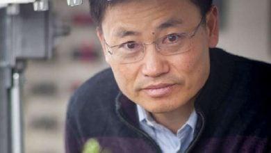 Photo of استفاده از سیستم CRISPR/Cas9 برای افزایش عملکرد برنج