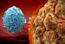 Photo of آزمایش های ایمونوتراپی با همکاری بنیاد پزشکی و شرکت Merck