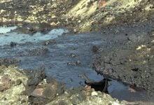Photo of تصفیه خاک های شور و آلوده به نفت با استفاده از گیاه و باکتری