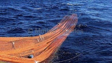 استفاده از تور های ماهیگیری ترال بیشترین تلفات را نسبت به هر نوع روش ماهگیری دیگر موجب می شود.