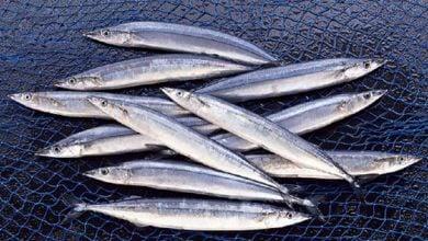 برنامه IFFO RS در حال حاضر، تاثیر عمده ای در تامین منابع مهم و معتبر مواد اولیه دریایی دارد.